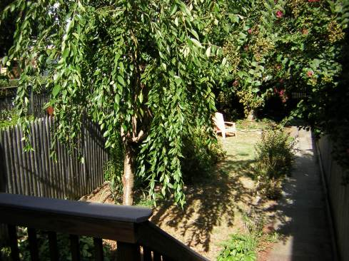 The view from the steps to the deck before any significant changes were made other than limbing up the cherry tree.