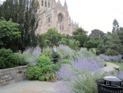 The cathedral and Russian sage.