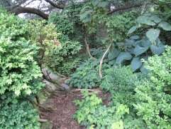 Old open boxwood with perennials growing at the base.