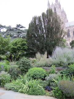 """The lower perennial bed. The center """"tree"""" is an enormous yew."""