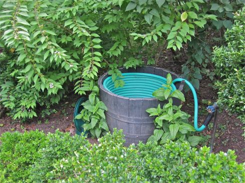 Garden hose in half barrel.