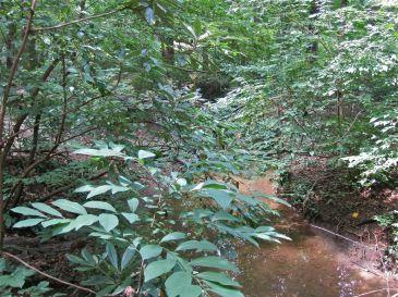 The stream.