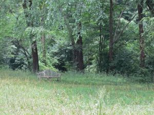 A bench in a meadow.