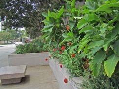 Canna, red zinnias, and coleus.