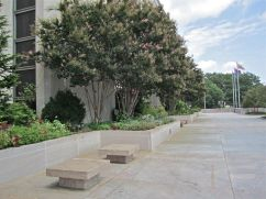 Planters and benches with crape myrtles Lagerstromeia indica 'Watermelon'.