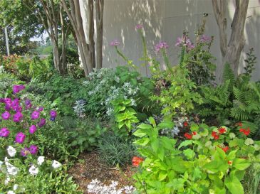 Petunias, cleome, and geraniums.