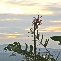 Sunset from my garden, Kigali.