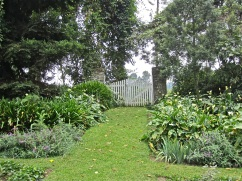 The front gate at the end of the long borders. The calla lilies were among Roz's favorite flowers.