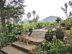 "Roz Carr's grave. ""The Rose of Gisenyi"" is written below the cross."