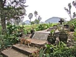 """Roz Carr's grave. """"The Rose of Gisenyi"""" is written below the cross."""