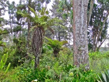 Tree ferns among a variety of plants.