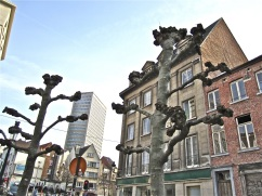 Brussels trees 8