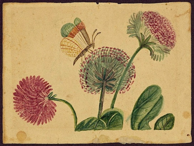 Butterfly and flowers, mid 19th c., Library of Congress