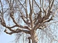 Lyon trees 2