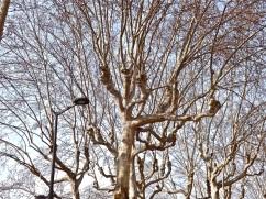 Lyon trees 7