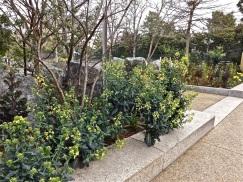 SI - butterfly garden 5