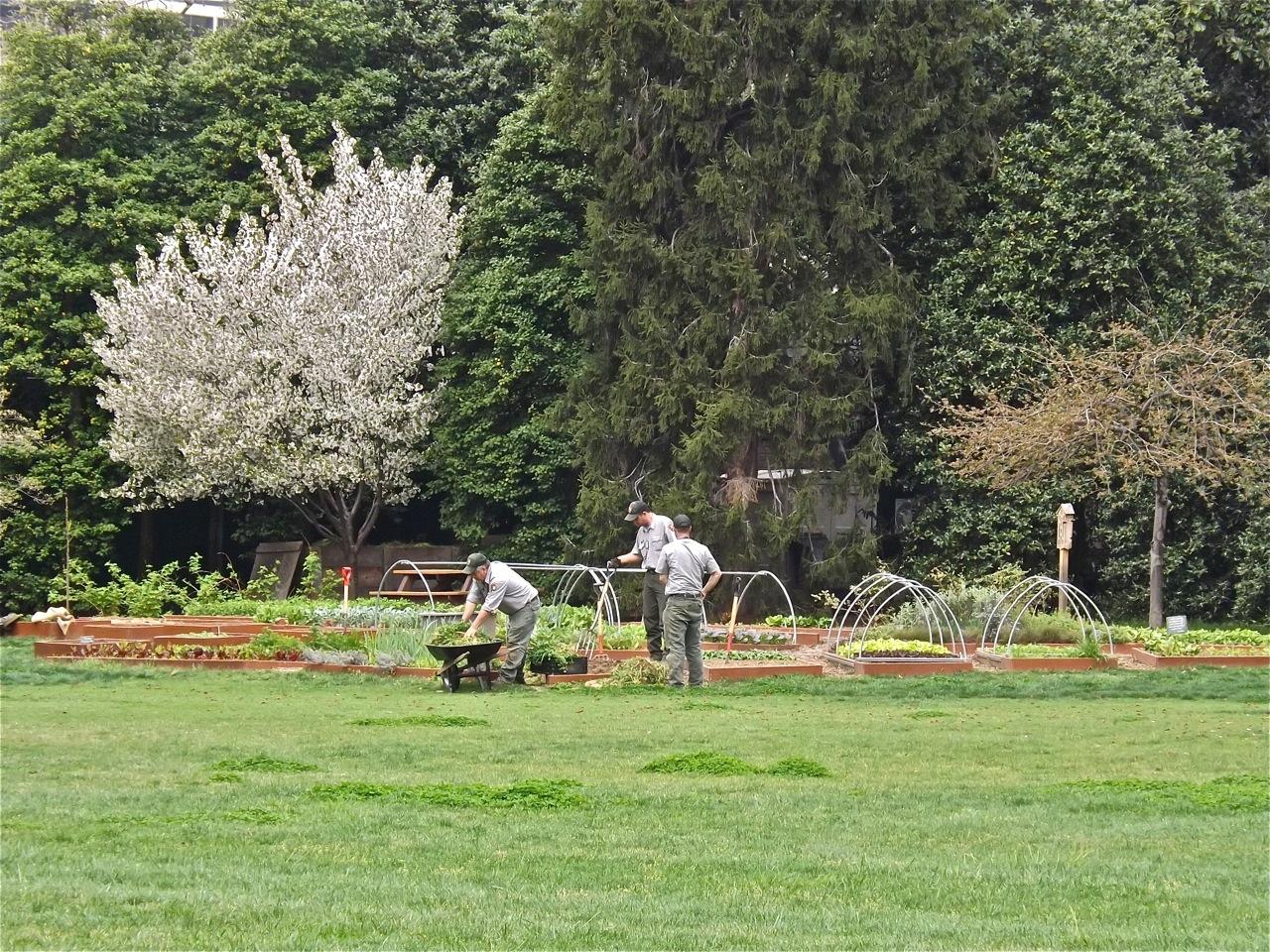 White House vegetable garden – enclos*ure