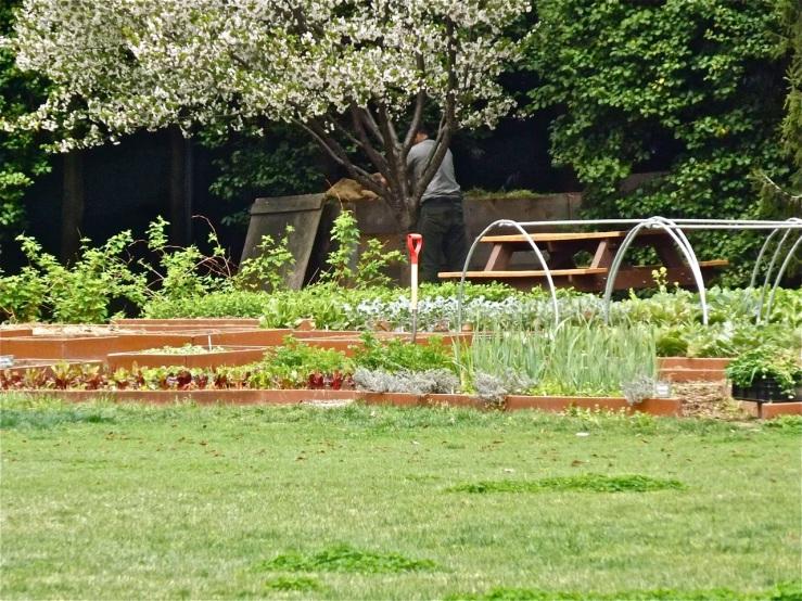 White House Vegetable Garden Enclos Ure