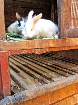 15 showing rabbit runoff