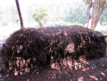 17 compost pile
