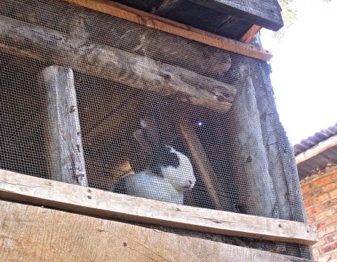 4 bunny