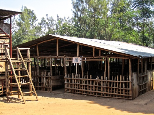 9 cow shed