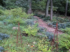 Clear filament protects Viburnums and Hostas. The dark green plants in the background are Hellebores.