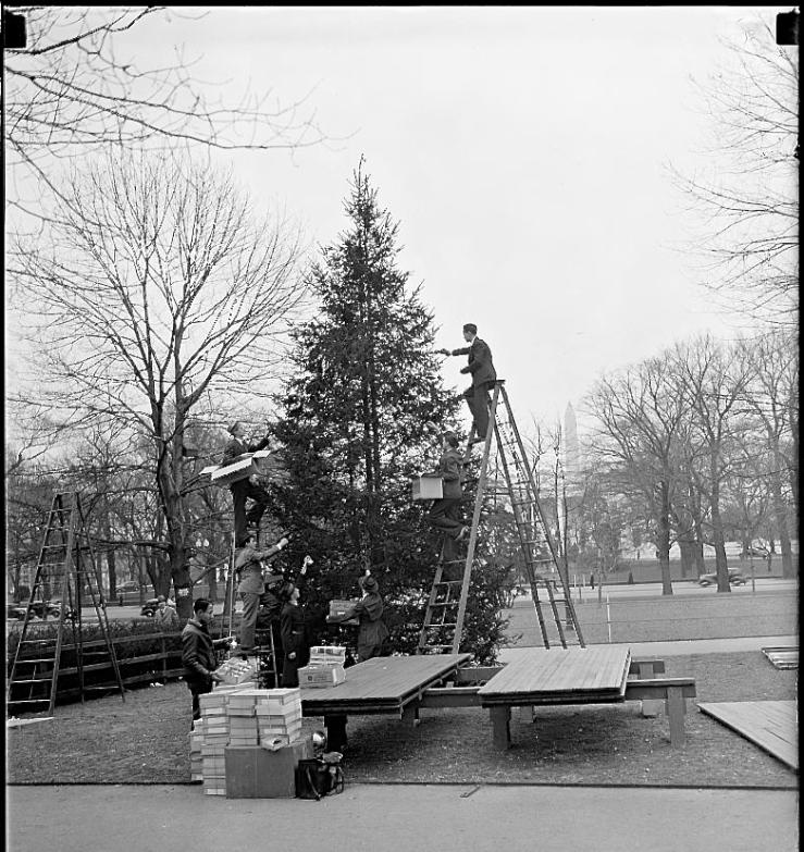 1930's tree, L0C