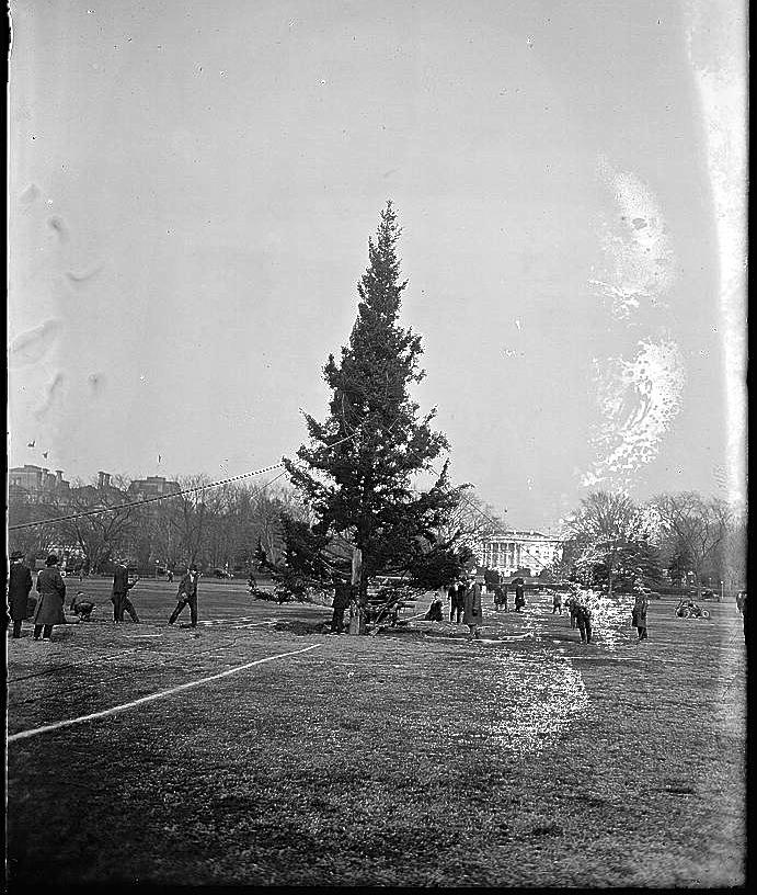 1923 tree setup, L0C