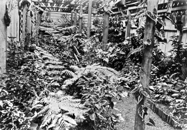 Fernery on Dulacca Station, Western Queensland, ca. 1900.