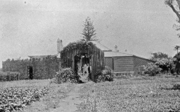 Garden of the old prison superintendent house, St. Helena, 1928. There is a small lath summer house in the center of the path and trellis around the perimeter of the home behind it — perhaps enclosing a verandah around interior rooms?
