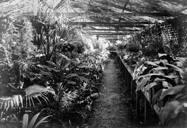 Shade-house in the garden at Merthyr House, Brisbane, ca. 1908.