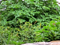 Plants near our terrace.