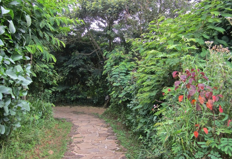 path - Virunga Safari Lodge