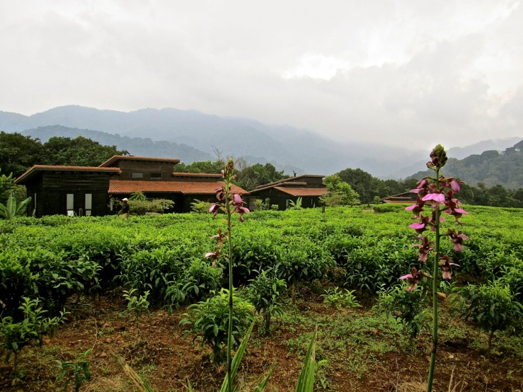 Nyungwe Forest Lodge, enclos*ure
