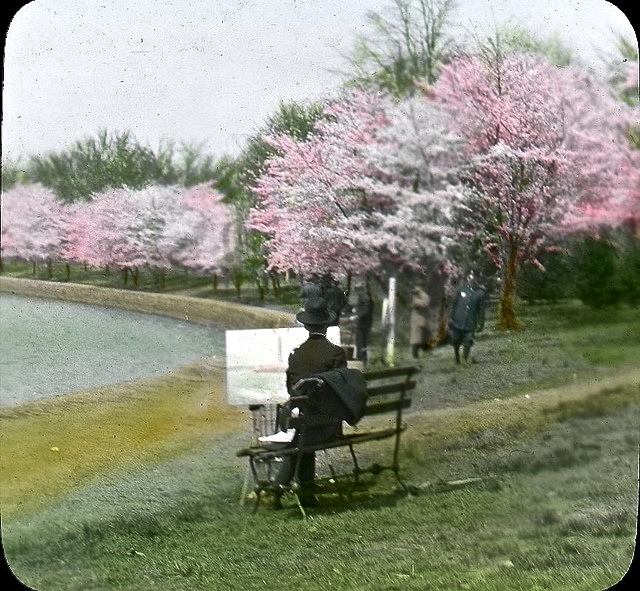 Painting the cherry blossoms, Wash., DC, c. 1920
