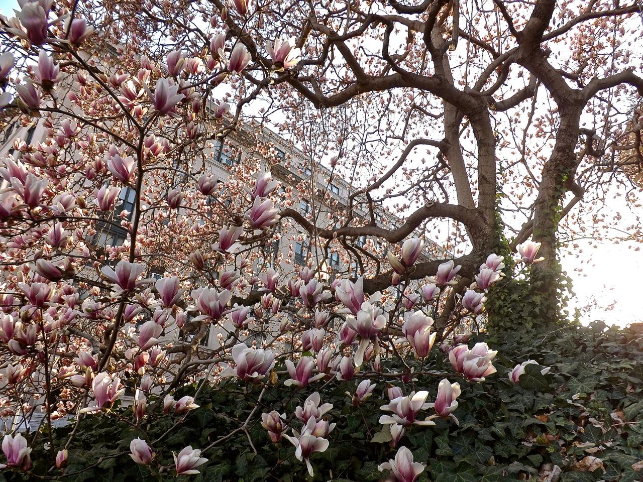 Magnolia Trees Enclosure