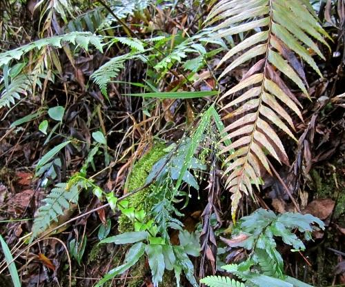 13c Forest floor, Nyungwe Park, Rwanda:enclos*ure