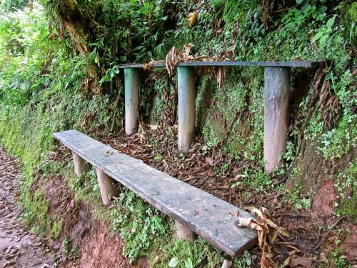 14 Trail benches, Nyungwe Park, Rwanda:enclos*ure