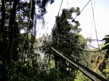 The start of the canopy walk