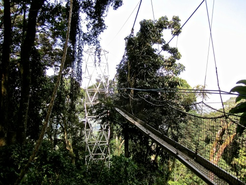 14a Canopy walk, Nyungwe Park, Rwanda:enclos*ure