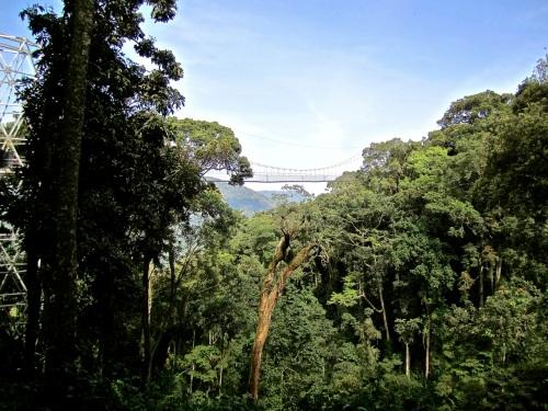16b Canopy walk, Nyungwe Park, Rwanda:enclos*ure