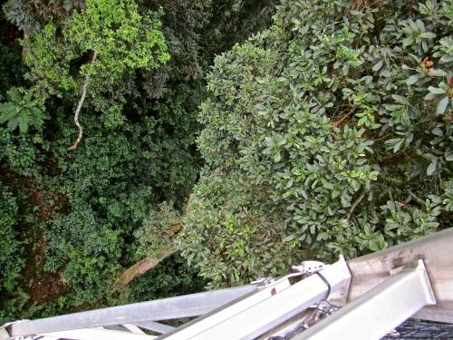 18 Look down, Canopy walk, Nyungwe Park, Rwanda:enclos*ure