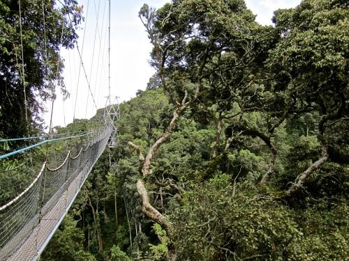 19 Treetops, canopy walk, Nyungwe Park, Rwanda:enclos*ure