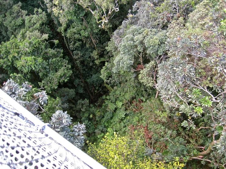 22 Look down, Canopy walk, Nyungwe Park, Rwanda:enclos*ure
