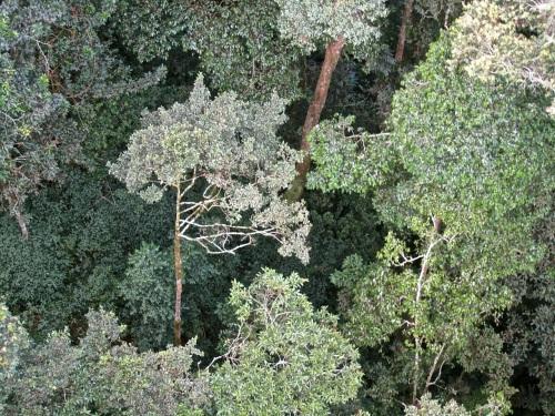 23 Look down, Canopy walk, Nyungwe Park, Rwanda:enclos*ure