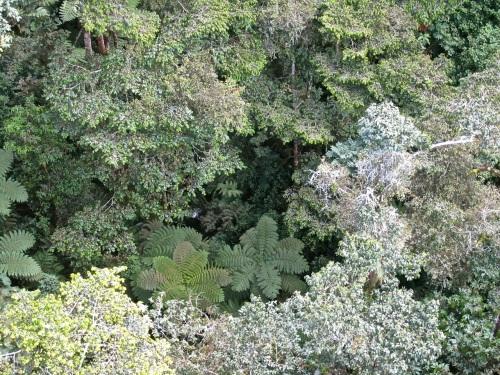 25Look down, Canopy walk, Nyungwe Park, Rwanda:enclos*ures