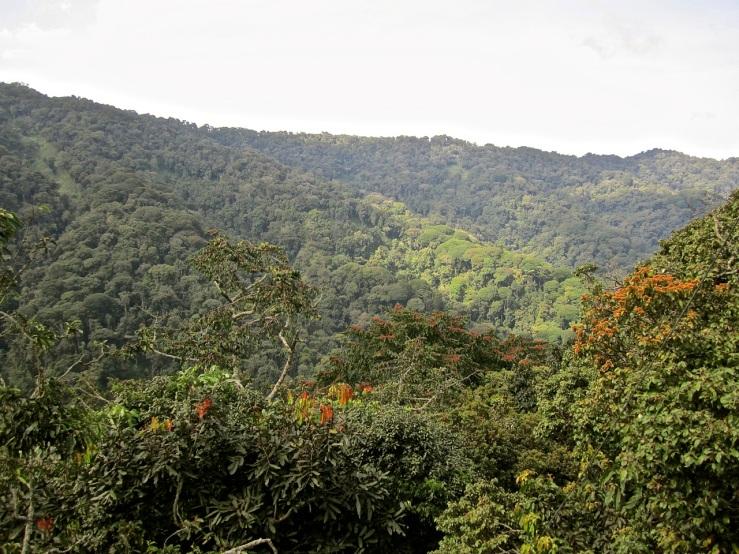 26 View from canopy walk, Nyungwe Park, Rwanda:enclos*ure