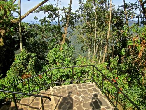 3 Steps to Igishigishigi Trail, Nyungwe Park, Rwanda:enclos*ure