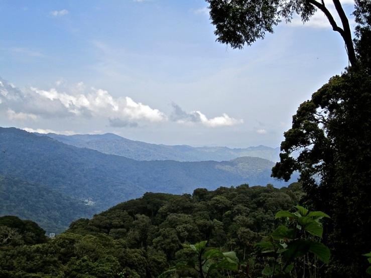 7 View, Nyungwe Park, Rwanda:enclos*ure